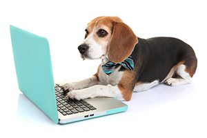 Rushville Veterinary Clinic in Rushville IL Provides Online Forms to Make Your Visit Easier